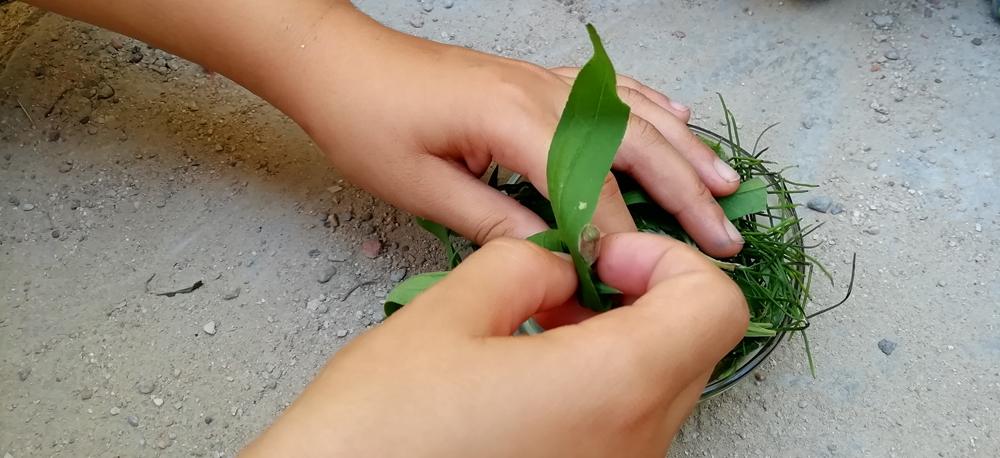 plantes remeieres